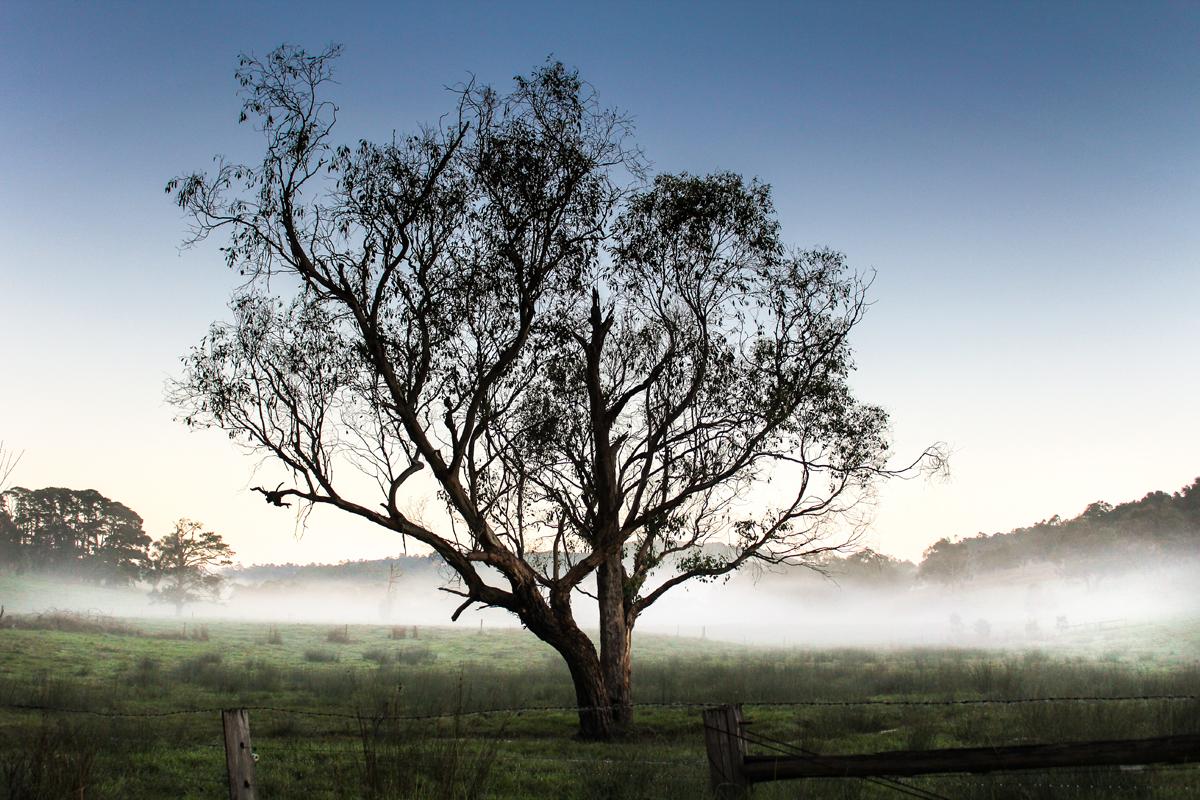 A fog filled morning