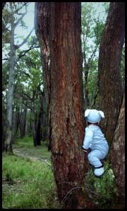 Adorable Koala in a tree