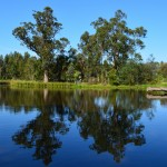 Blue Gum Reflections