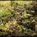 Likin' the lichen