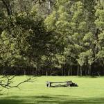 Toomuc Valley Beauty