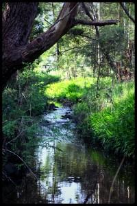 Toomuc Valley Creek
